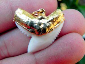Modern Tiger Shark Tooth